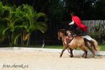 koňská show