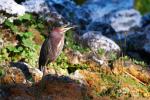 volavky a jiné ptactvo