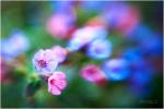 jaro na zahrádce