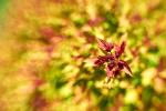 květen na zahrádce