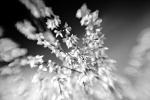 černobílé jaro
