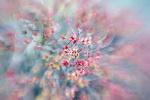 barevné jaro