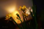 Velikonoce 2012