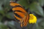 různí motýli