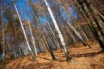 listopad v lese