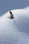 hřbitov pod sněhem