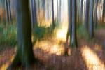 lesní akvarely