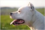 fotograf psů