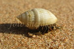 život na pláži